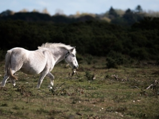 Matthew Barfield Wildlife Photography New Forest Pony