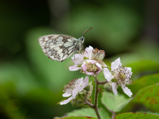 Matthew Barfield Photography Insects New forest Wildlife